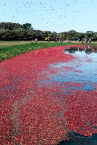 Fare Isle | Nantucket Cranberry Festival - Vegan Maple Sweetened Cranberry Sauce Recipe